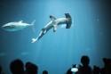 Christopher Michel Monterey Bay Aquarium